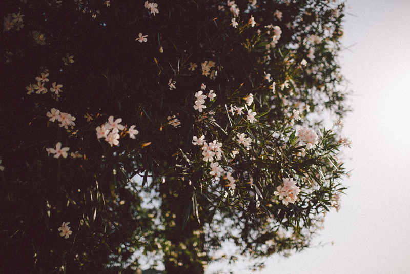 croatia travel photography lopud island adriatic coast pink oleander