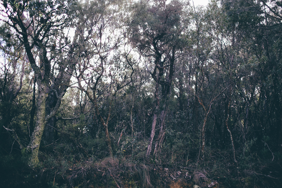 blue-mountains-sonjacphotography-10