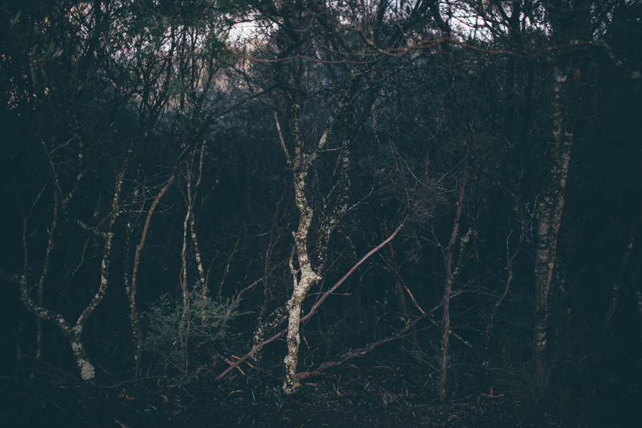 blue-mountains-sonjacphotography-9