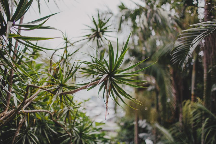 sydney-wedding-photographer-sonjac-palm-beach-4