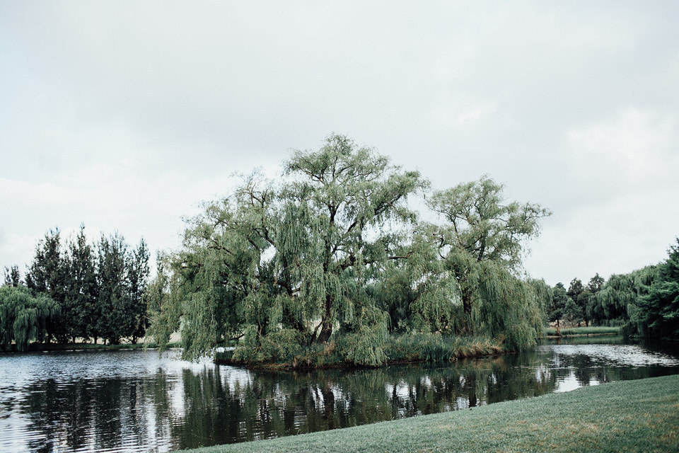 bendooley estate willow tree