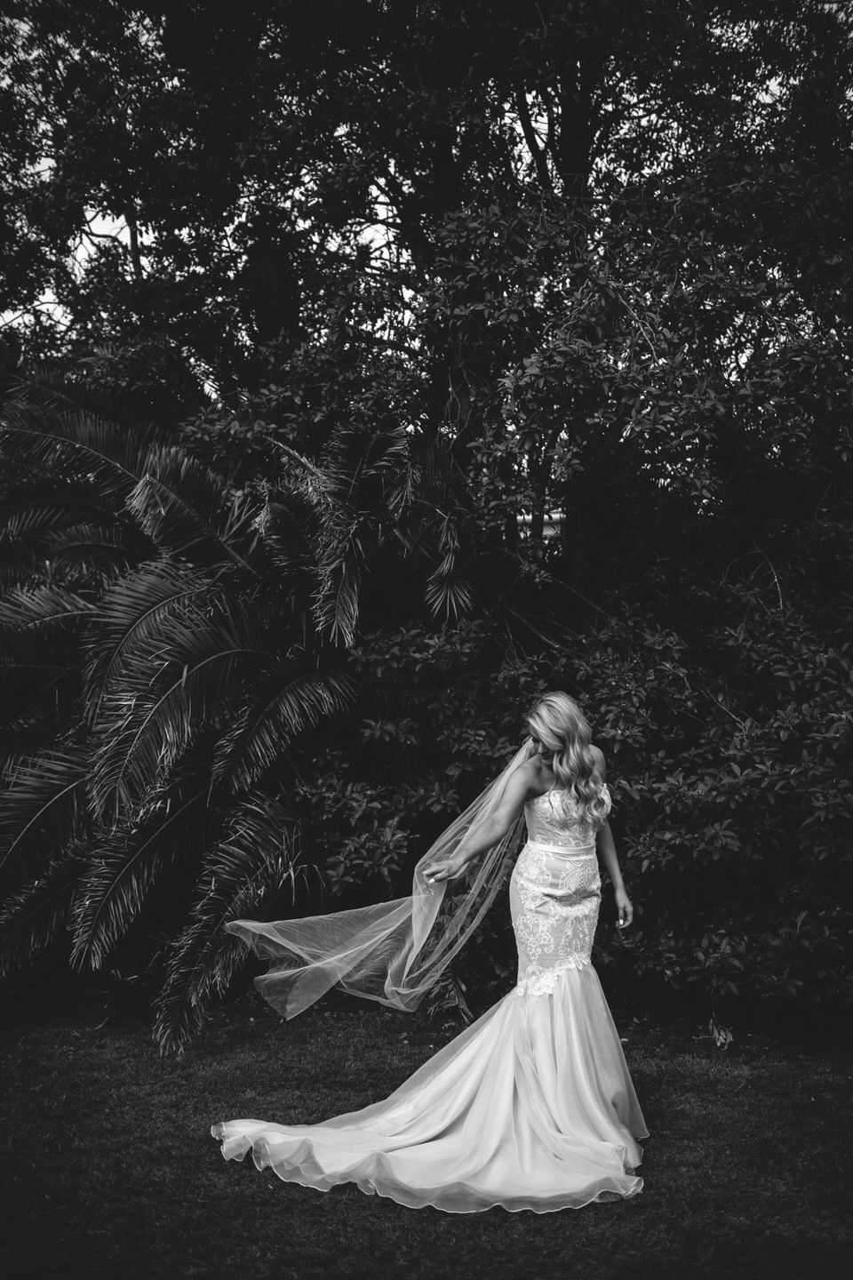 Bride holding her veil standing in front of palm trees in Vaucluse